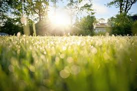 dew with sun